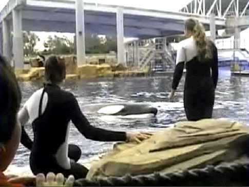 SeaWorld trainer killed by killer whale  CNNcom