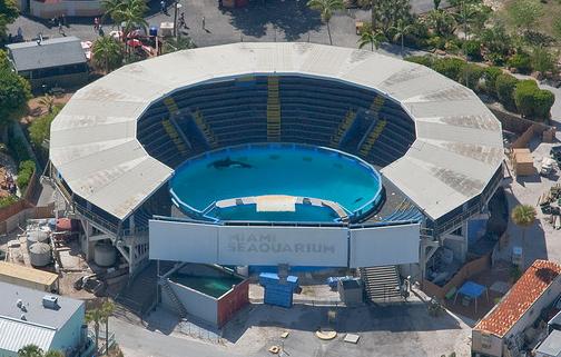 Miami Seaquarium- Lolita's pool.