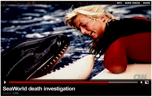 "Click on the video to watch Carol Ray on CNN's ""SeaWorld Death Investigation"" which aired August 23, 2010."