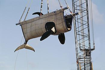 Lifting a Killer Whale