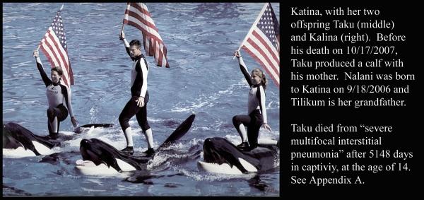 Katina, Taku, Kalina and Flag Bearing Trainers