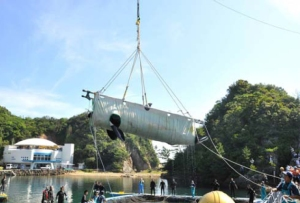 Nami Lifted out of Seapen at Taiji Whale Museum