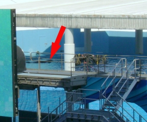 Tilikum in solitary confinement in a back pool 02-23-2011