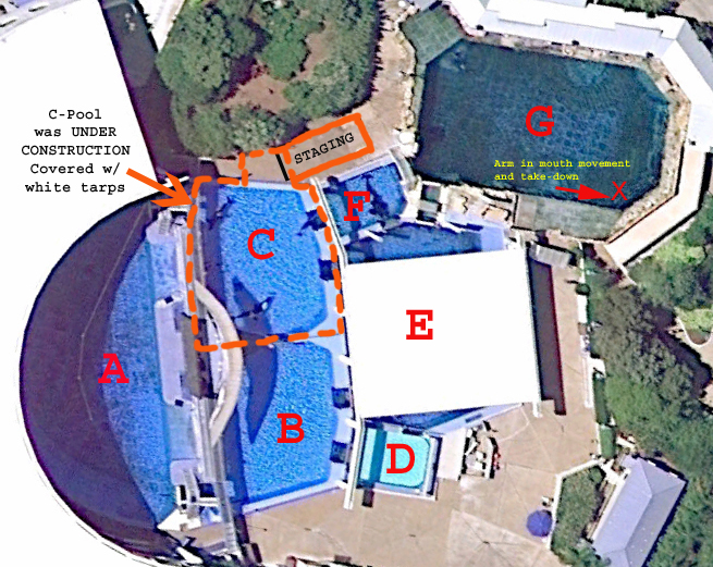 Seaworld trainer death theory debunked as a ponytail tale for Pool show orlando 2015