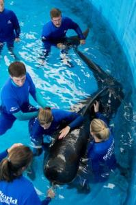 SeaWorld claims to be pro-active in marine mammal rescuesSeaWorld claims to be pro-active in marine mammal rescues