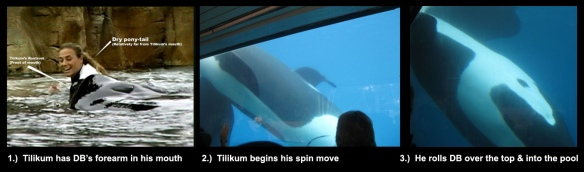 New Photos of Killer Whale involved in Trainer Death at