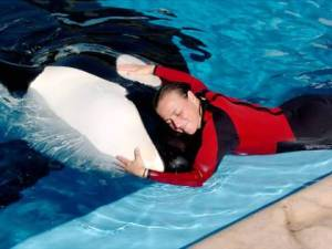 Dawn and Tilikum's close interaction and contact was not uncommon~ file photo