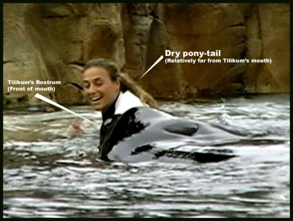 "Despite claims of Dawn's ponytail ""floating"" into Tilikum's mouth, this still from the Connell family video would indicate that her hair remained high and dry just seconds before the take-down."