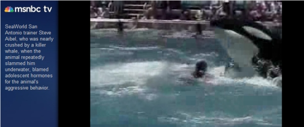Click here to watch an MSNBC video from 2004 of trainer Steve Aibel being pummeled by Kyuquot at SeaWorld of Texas (opens in new window)
