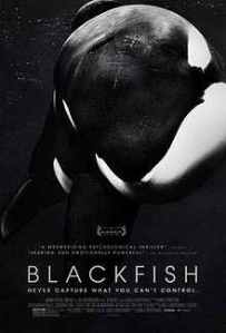Documentary film 'Blackfish'